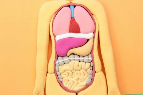 長年苦しめられた腰痛の本当の原因は肝臓だった!?
