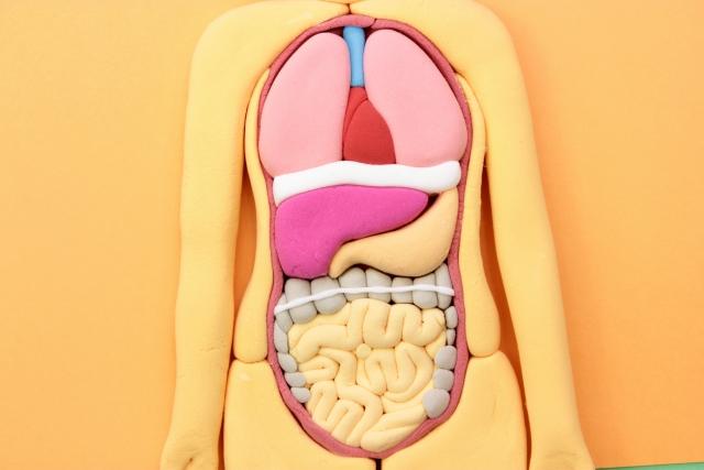 すべり症のからくる腰痛の本当の原因は「内臓」でした。